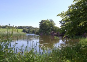 See and Do in the Rhins of Galloway, South West Scotland - visit the six Galloway Gardens