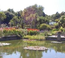 Logan Botanic Garden, Scotland's most exotic garden, Rhins of Galloway